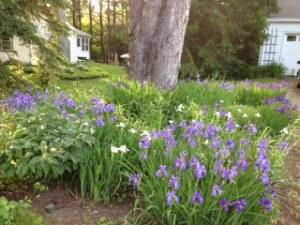 front iris